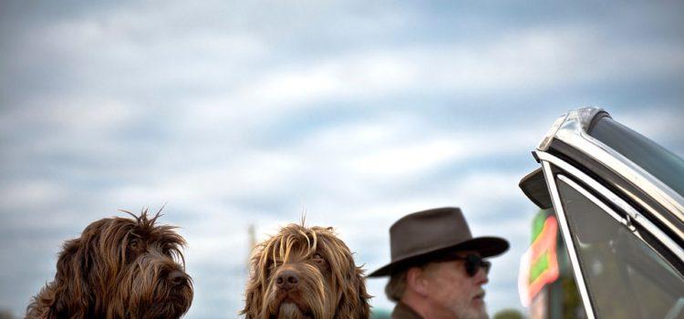 Cestujete so psom? A spoznáte, keď mu nie je dobre?