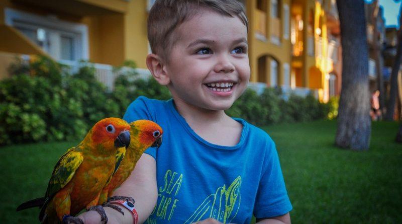 Když se dítě chce stát chovatelem papoušků. Jaký druh mu pořídit?