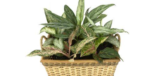 Ako sa starať o tieňomilné rastliny?