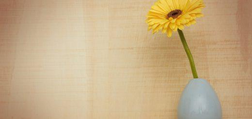 Milujete farby? Kúpte si farebné kvety skrášľujúce domov