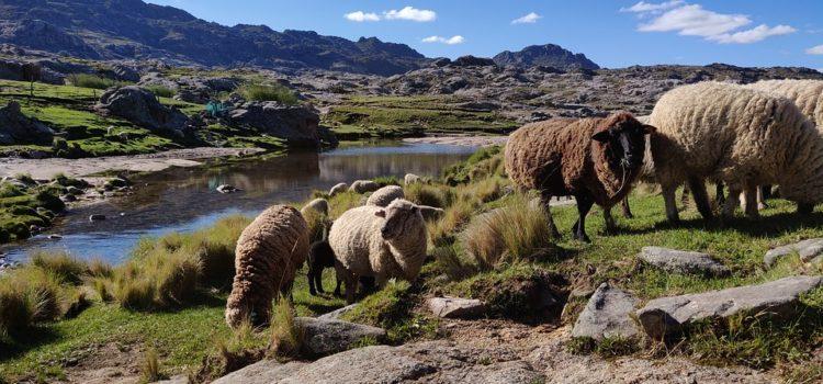 Mierite do Argentíny? Zistite niečo o histórii krajiny