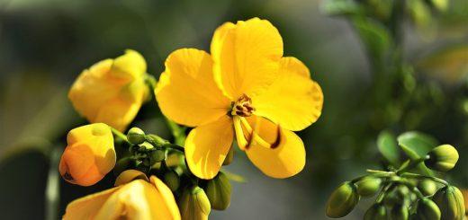 Najkrajšie kvety do interiéru. Spestrite aj svoje bývanie