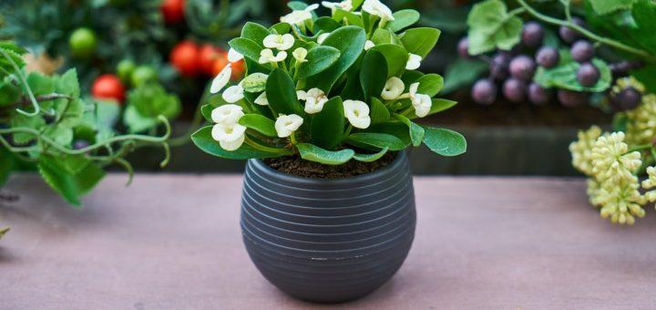 domácnost květinami