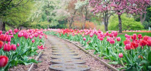 Tipy pre krásnu záhradu